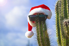 Cactus with a Santa hat Royalty Free Stock Photo