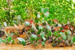 Cactus sauvage Photos stock