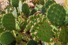 Cactus sauvage vert sur le fond d'un paysage pittoresque photo stock