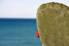 Cactus by the sea 2 Royalty Free Stock Image