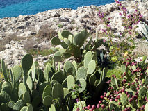 Cactus by sea Stock Photo