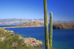 Cactus, sea and mountains Royalty Free Stock Photography