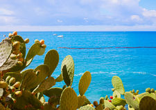 Cactus and sea Royalty Free Stock Photography