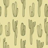 Cactus seamless pattern Stock Photos