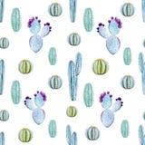 Cactus seamless patterns Stock Photo