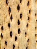 Cactus sec Photo stock