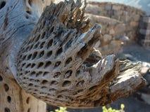 Cactus sec Photo libre de droits