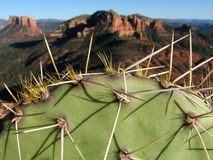 Cactus in Sedona. Macro of a cactus pad with the red rock mesas of Sedona, Arizona in the background Stock Photos