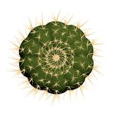 Cactus seen from above. Stock Images