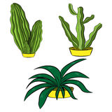 Cactus set Royalty Free Stock Photography