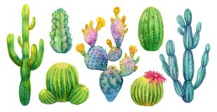 Cactus set watercolor isolated illustration. Cactus set. Hand painted watercolor isolated cacti. Saguaro opuntia cereus and other stock illustration