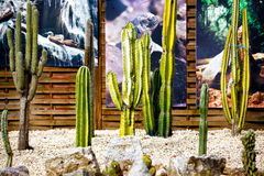 Cactus. Set of cactus. Several type Royalty Free Stock Photography