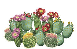 Cactus set. Watercolor cactus border isolated on white background Stock Illustration