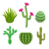 Cactus set Royalty Free Stock Images