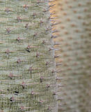 Cactus sharp spines Stock Image