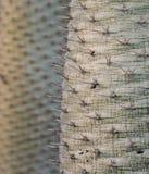 Cactus sharp spines Stock Image
