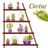 Cactus Shelf Illustration Stock Photo