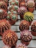 Cactus shop royalty free stock photo