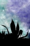 Cactus Silhouette. Silhouette of cactus with blue sky background Stock Images