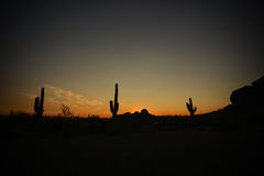 Cactus silhouette with a beautiful sunset Royalty Free Stock Photography