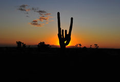 Cactus silhouette colorful sunset, arizona, united states Royalty Free Stock Photo