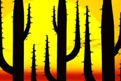 Cactus silhouettes at sunset Stock Photos