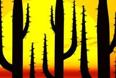 Cactus silhouettes at sunset Stock Photos