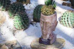 Cactus similar al cristata elongata del mammillaria del cerebro humano imagen de archivo libre de regalías