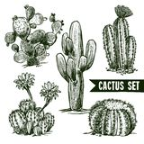 Cactus Sketch Set. Different shapes desert and domestic cactus sketch set isolated vector illustration vector illustration