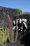 Cactus and skulls Stock Photos
