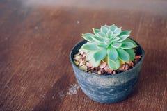 Cactus Royalty Free Stock Photos