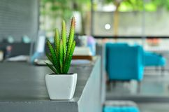 Cactus. Small cactus decorations inside reataurant Stock Photography