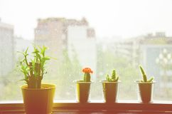 Cactus and small plant near window vintage photo filtered retro Royalty Free Stock Photos