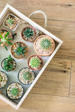 Cactus in small pots Royalty Free Stock Photos