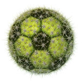 Cactus Soccer Ball. Digital illustration of a soccer ball with a cactus texture Royalty Free Stock Photo