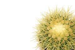 Cactus solare Fotografie Stock