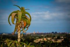 Cactus solo Fotos de archivo