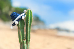 Cactus with sombrero at the beach. Cactus plant with Spanish Sombrero at the beach Stock Image