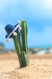 Cactus with sombrero at the beach. Cactus plant with Spanish Sombrero at the beach Stock Images