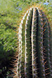 Cactus in the Sonora Desert Stock Images