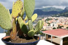 Cactus at Sorrento Italy. A cactus plant in a blue bowl with Sorrento Italy in the background Stock Photo