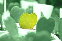 Cactus sous forme de coeur Photo stock