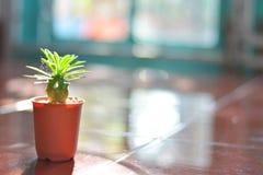 Cactus, spiderweed et soleil de soirée horizontal Photos stock