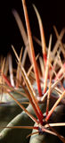 Cactus Spikes. Extreme closeup of long cactus spikes Stock Photography