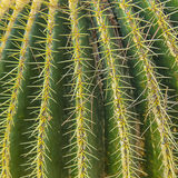 Cactus spikes close up on lines pattern, greenish and yellow Stock Photography
