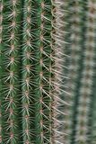 Cactus spikes closeup Royalty Free Stock Photo