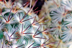 Cactus spikes detail Royalty Free Stock Photos
