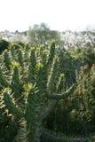 Cactus spiky plant outdoors Royalty Free Stock Photos