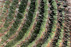 Cactus Spine Macro. Macro of sharp spines of barrel cactus plant Royalty Free Stock Photography