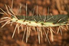 Cactus Spines Stock Photos